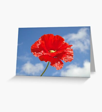 The Single Poppy Greeting Card