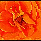 Orange fantasy by KatarinaD