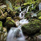 Franz Josef, New Zealand by Wanagi Zable-Andrews
