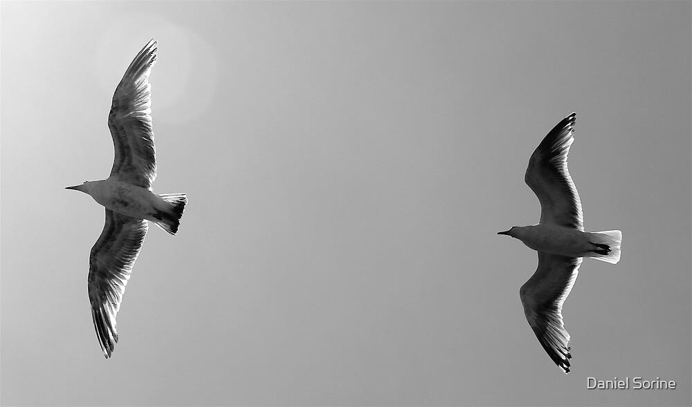 2 seagulls flying by Daniel Sorine