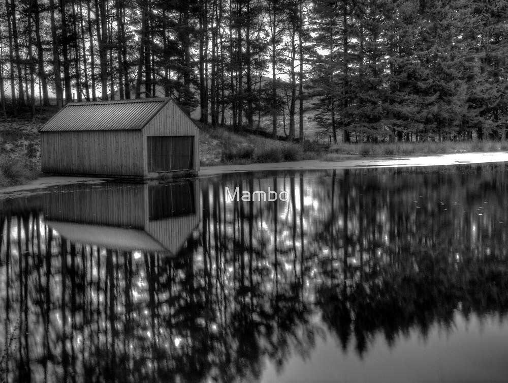 Sunrise Reflection by Mambo