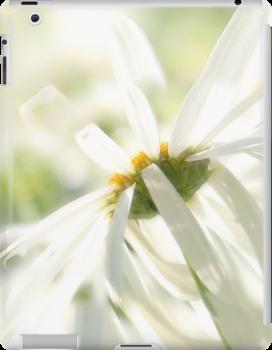 Daisy a day (iPad) by John Poon