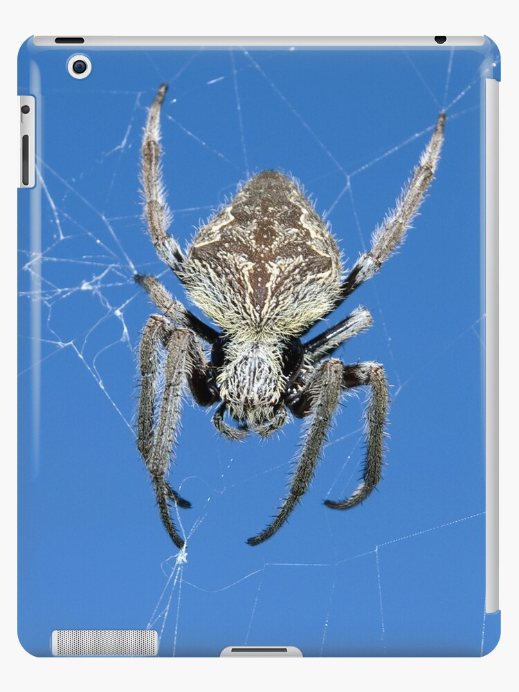 Into the web - iPad case by Sandro Rossi Imagery