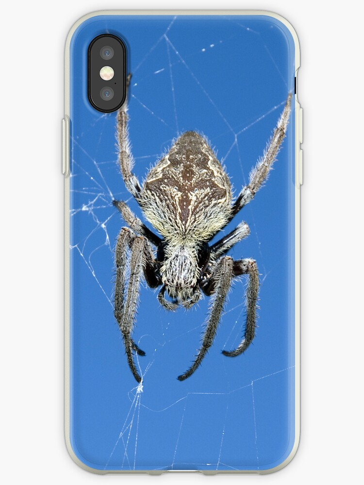 Into the web - iPhone case by Sandro Rossi Imagery