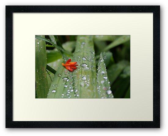 Little Flower by Somerset33