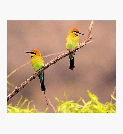 Rainbow Bee- Eaters Male and female Photographic Print