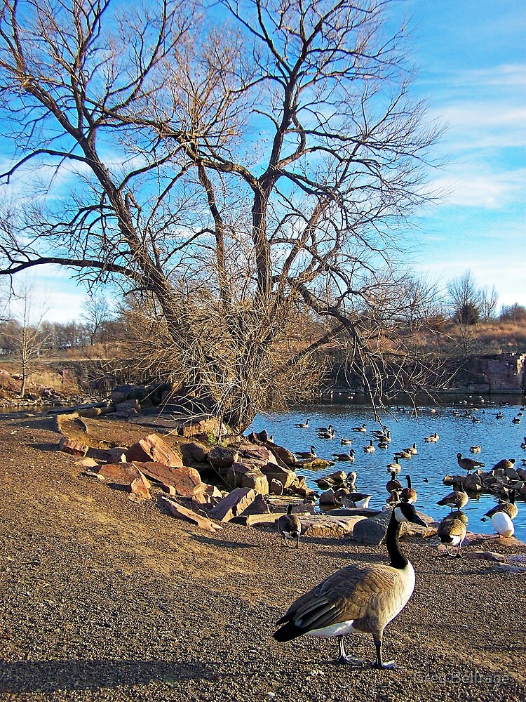 A Gaggle of Geese by Greg Belfrage