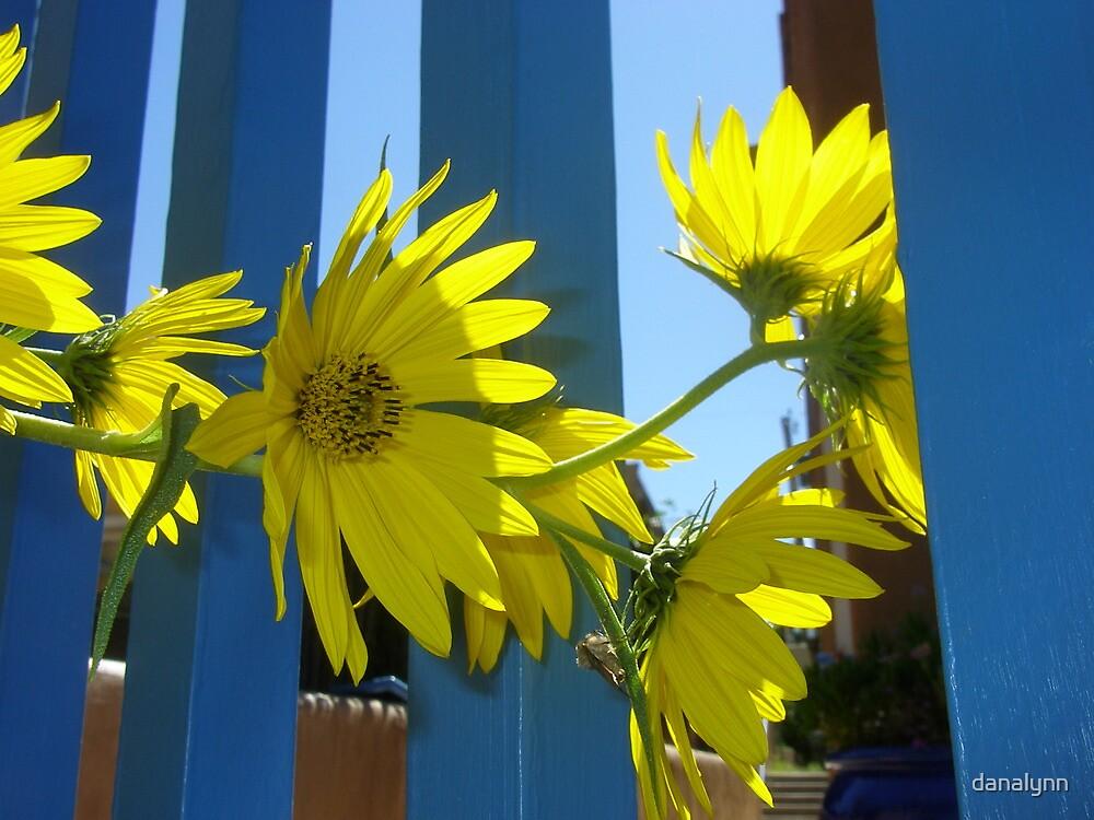 Sunflowers, Santa Fe by danalynn