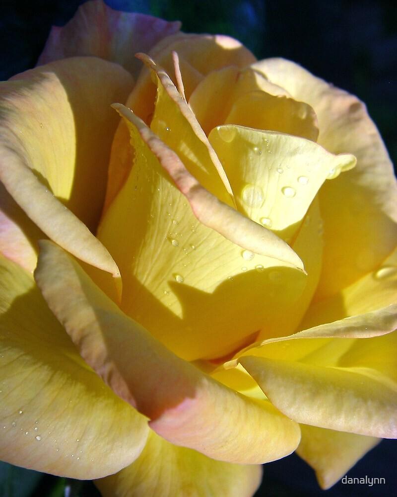 Yellow Rose of Texas by danalynn