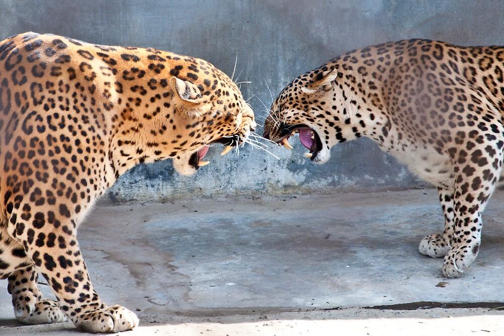 Leopard Replica by Varun Jalota