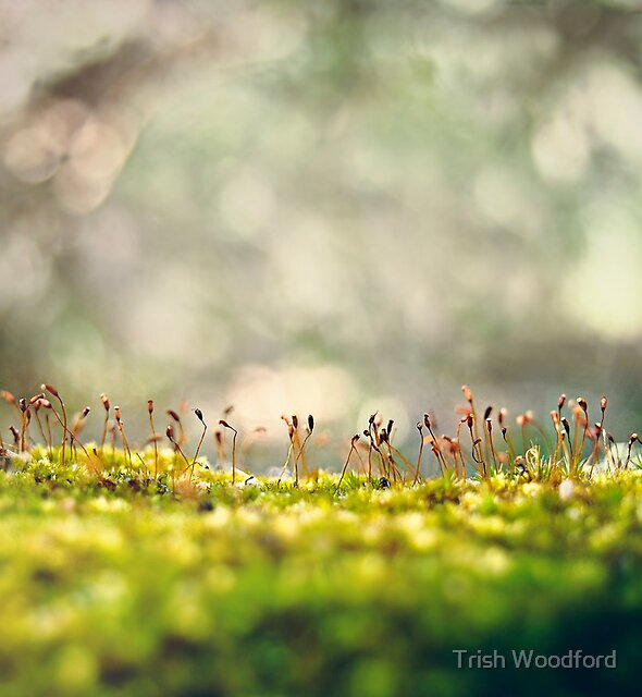 Another World II by Trish Woodford