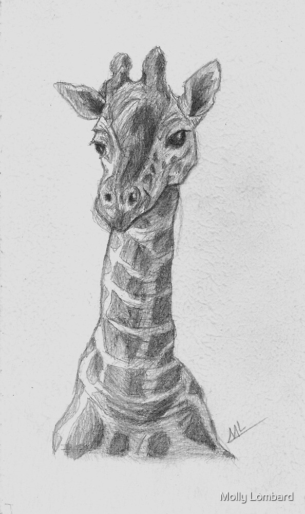 Silverpoint Giraffe by Molly Lombard