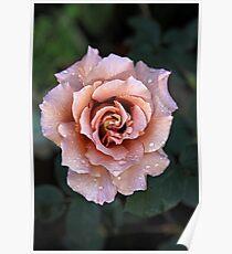 Julia's rose Poster