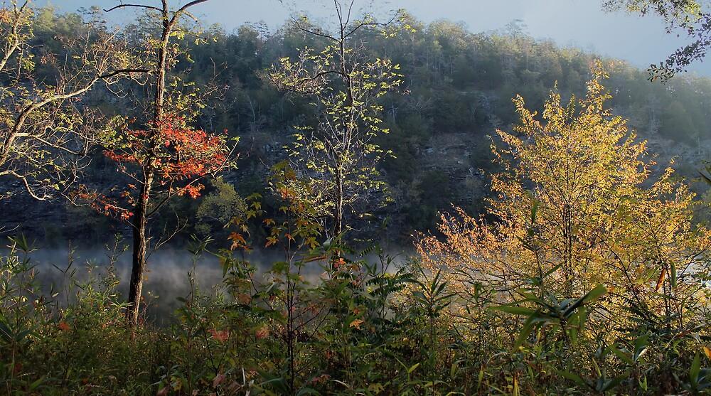 Mountain Fork Riverbank Trees by Carolyn  Fletcher