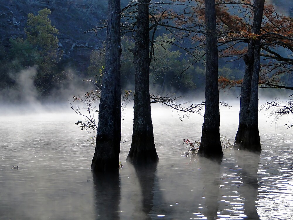 River Mist And Cypress Trees by Carolyn  Fletcher