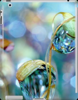 Rainbow Moss Drops by Sharon Johnstone