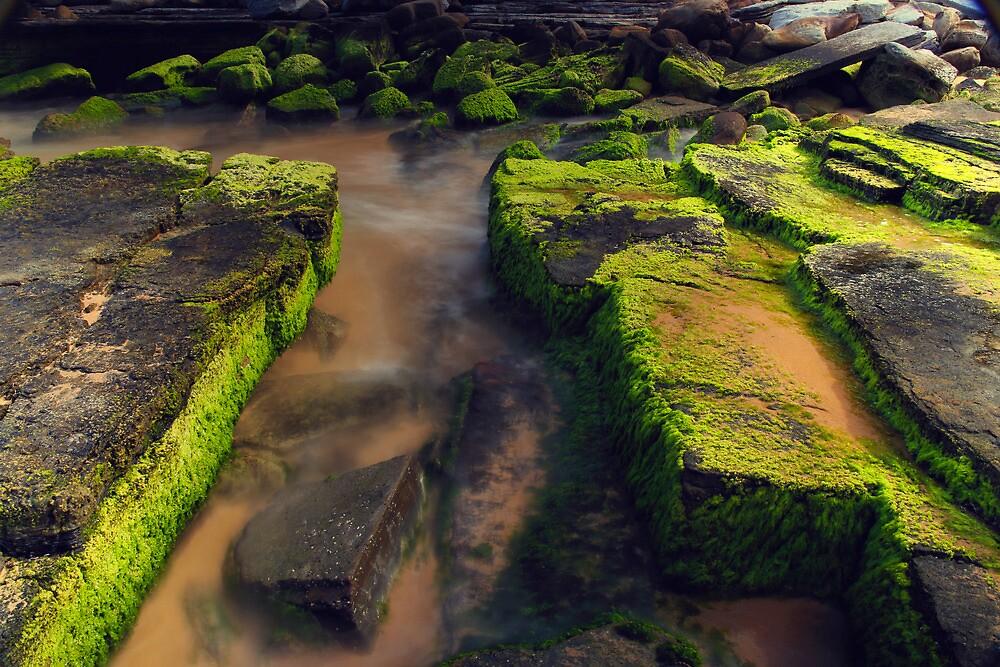 Green Moss at Turimetta Beach by kcy011