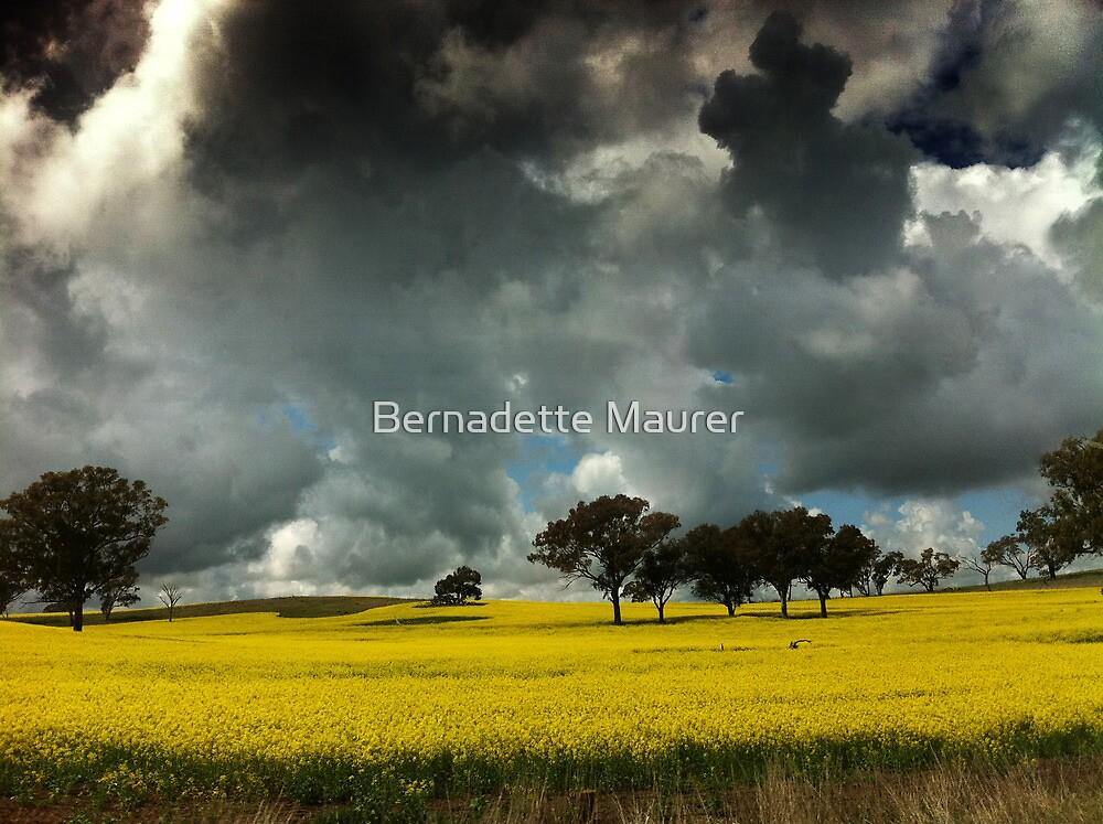 Canola by Bernadette Maurer