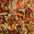 It's A Colorful Autumn! by RickDavis