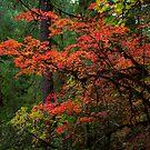 Autumn Glow by Thomas Dawson