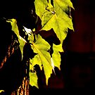 Sunny Leaves by BMV1