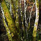 Autumn in the Forest by BMV1