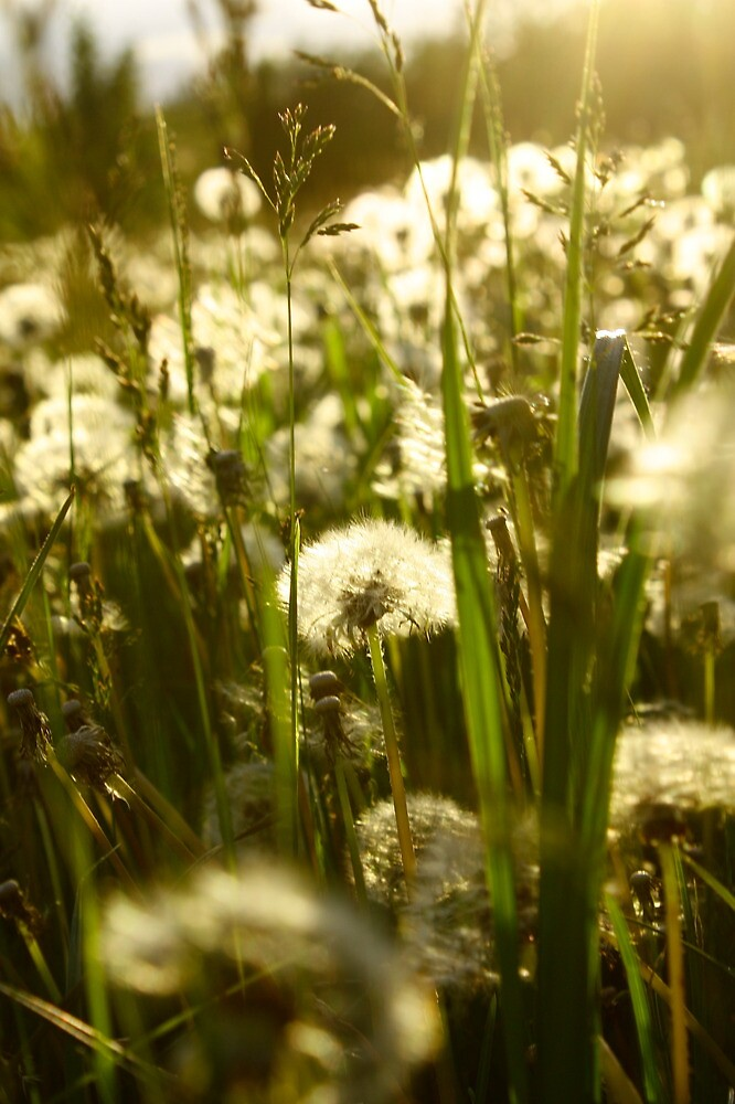 Frolic Field  by JerryCordeiro