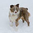 Snowdog by Samantha Dean