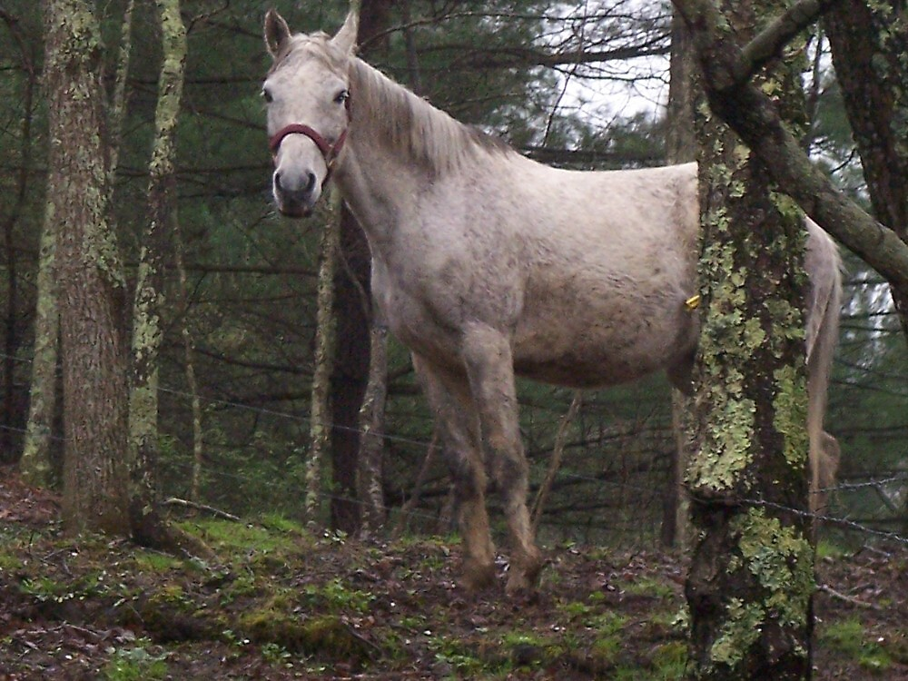 Horse in the Woods by dww25921
