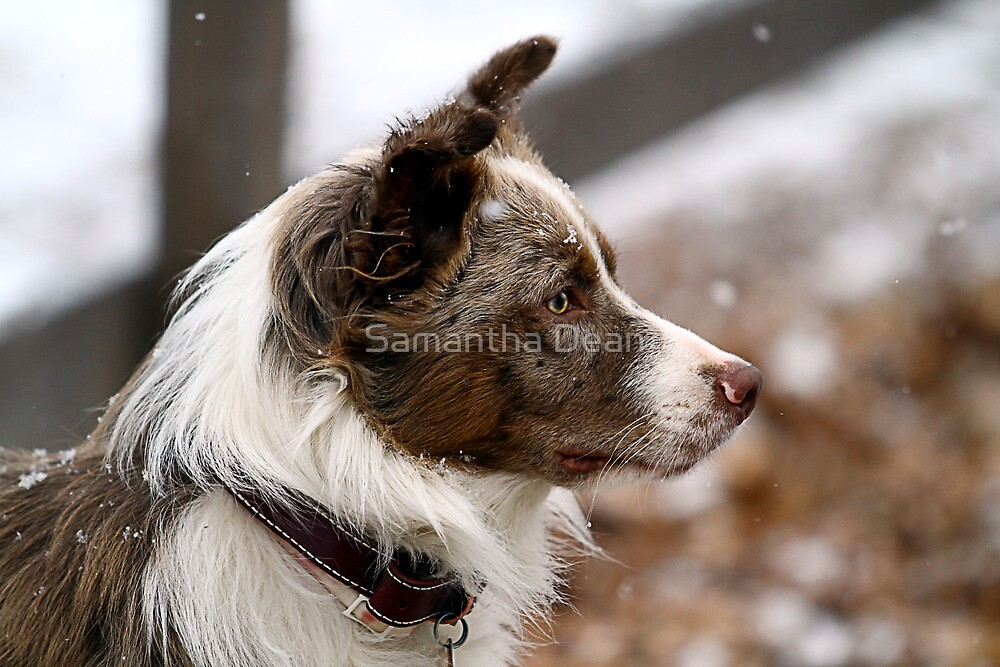 First Snow by Samantha Dean