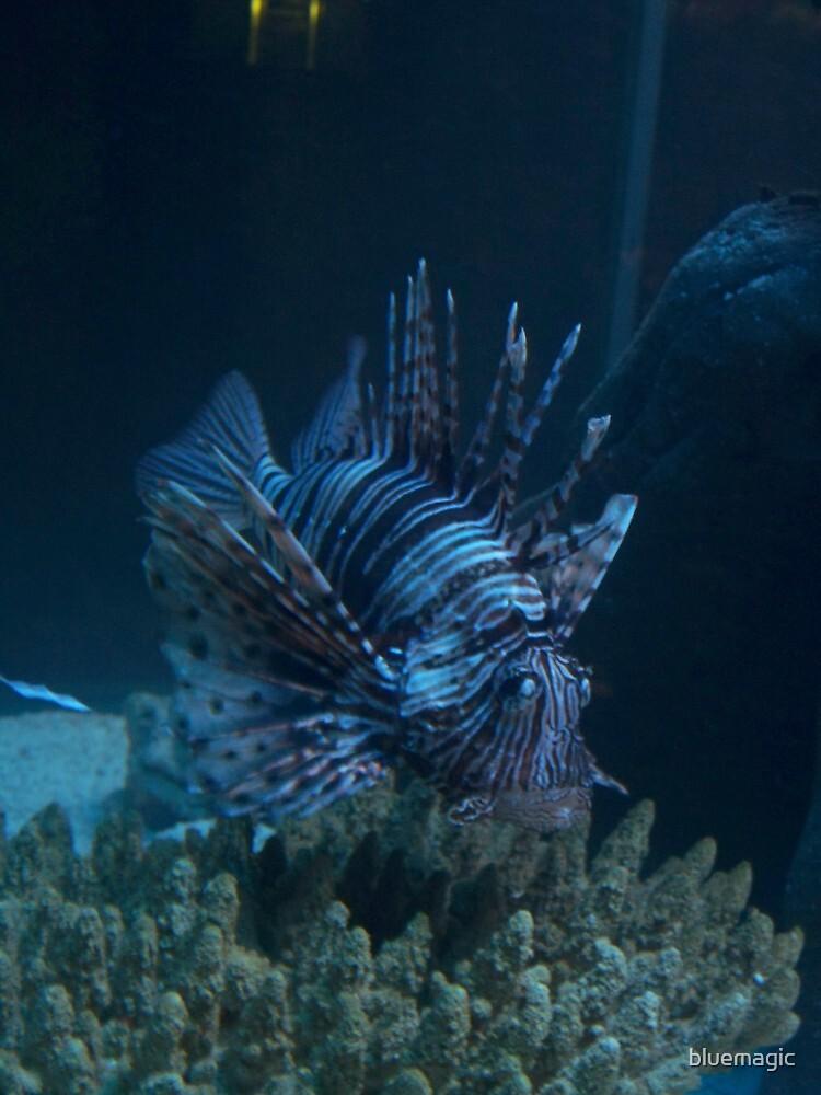 Lion Fish by bluemagic