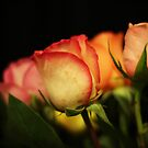 Flowers on a black background by Phill Sacre