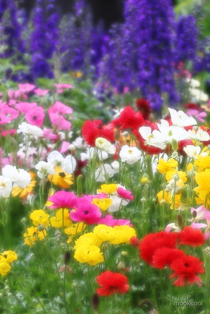 Anemones & Delphiniums - Orton by mooksool