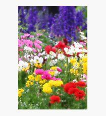 Anemones & Delphiniums - Orton Photographic Print
