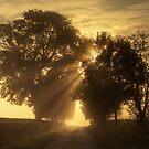 Misty Rays by Brian Kerr