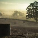 Mist Over The Eden by Brian Kerr