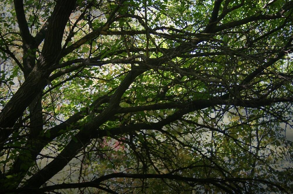 Canopy by SueMydliak