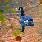 Golden Goose by Alex Call