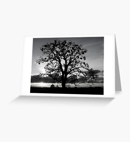 Lone Oak Silhouette Greeting Card