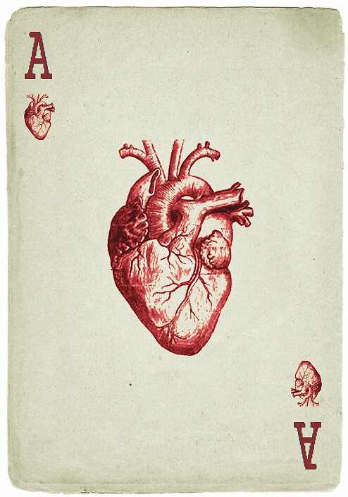 Ace of Hearts by Steph Sauerbier
