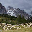 Sheep below Rif Cinque Torre, Dolomites, Italy by David Galson