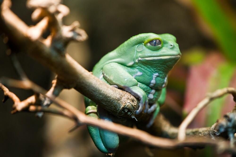 Stick Frog by Mat Hockett