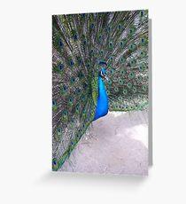 Peacock - San Diego Zoo Greeting Card