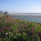 Oregon coast by danalynn