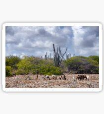 Goats on Bonaire Sticker
