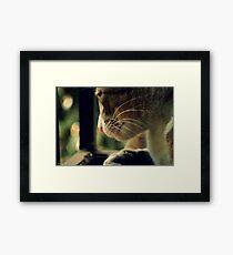 Pensive Feline Framed Print