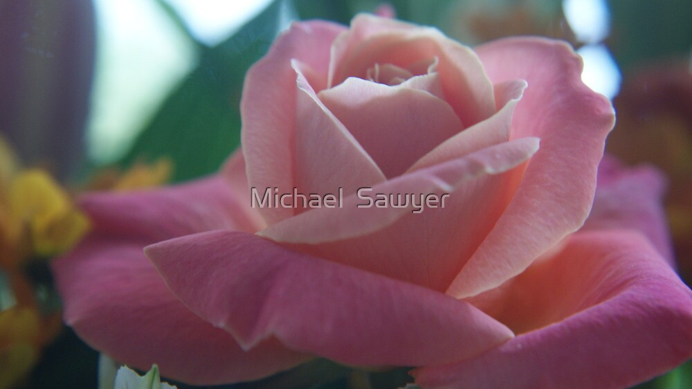 Close up Nature by Michael  Sawyer
