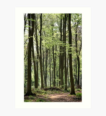 Path Through The Wood Art Print