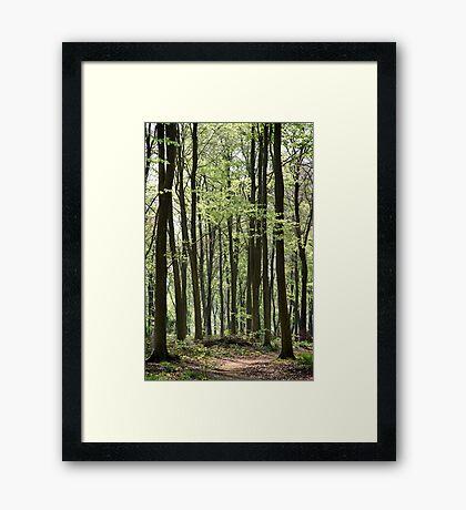 Path Through The Wood Framed Print