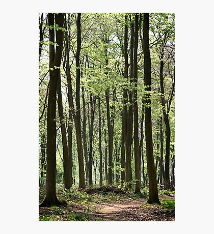 Path Through The Wood Photographic Print